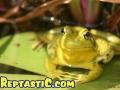 frog2-1.jpg