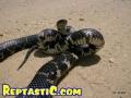 snakepic5.jpg