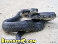 snakepic6.jpg