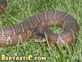 snakes2-1.jpg