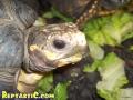 tortoise2-6.jpg