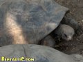 tortoise3.jpg