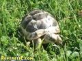 tortoise7.jpg