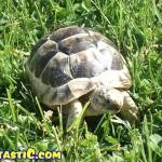 tortoise7