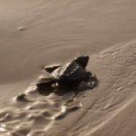 beach-turtle