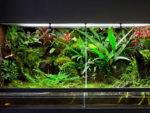 reptile-terrarium-shutterstock_82436296